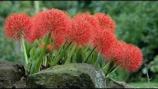 [Binh Bonsai] Cách trồng hoa Hồng tú cầu cực đẹp – Những đồ dùng và công dụng ban đầu trồng Hoa