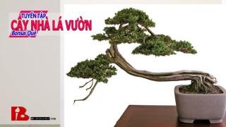 ~[Binh Bonsai] Những bước ban đầu để làm tác phẩm bonsai đẹp bonsai nghệ thuật Binh Bonsai