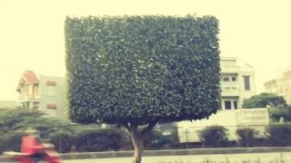 [Binh Bonsai] – Những kiểu dáng cây môi trường ai cũng làm được – cây cảnh đón tết