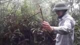 [Binh Bonsai] – Trồng sim rừng – bonsai sim – Chơi cây ngày tết