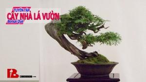 ~Chi Tiết quá trình tạo Cây bonsai lũa thân tuyệt đẹp Đúng là kiệt tác bonsai Binh Bonsai