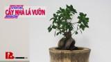 ~Đằng sau những tác phẩm Bonsai đẹp Cuộc hành trình tìm phôi bonsai nghệ thuật của Thạch Sanh Binh